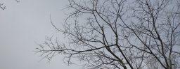 1月14日軽井沢。小寒。次候。水泉動。