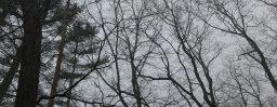 1月16日軽井沢。小寒。末候。雉始雊。