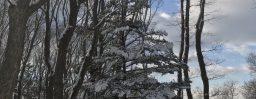 1月23日軽井沢。大寒。初候。款冬華。