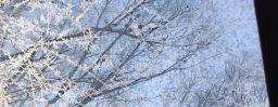 1月29日軽井沢。大寒。次候。水沢腹堅。