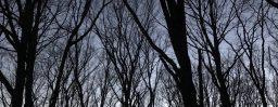 1月30日軽井沢。大寒。末候。鶏始乳。