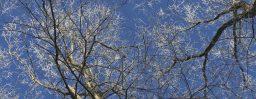 2月5日軽井沢。立春。東風解凍。