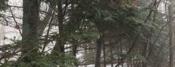 2月11日軽井沢。立春。黄鶯睍睆。