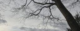 3月5日軽井沢。雨水。草木萠動。