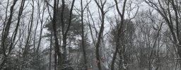3月21日軽井沢。春分。雀始巣。
