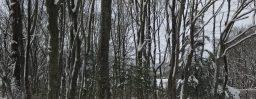 3月22日軽井沢。春分。雀始巣。