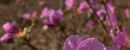 4月3日軽井沢。春分。雷乃発声。