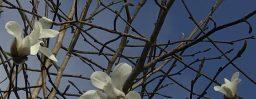 4月5日軽井沢。清明。鴻雁北。