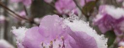 4月8日軽井沢。清明。玄鳥至。