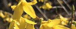 4月9日軽井沢。清明。玄鳥至。