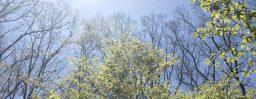 4月26日軽井沢。穀雨。霜止出苗。
