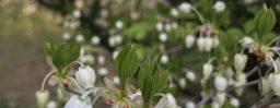4月29日軽井沢。穀雨。霜止出苗。