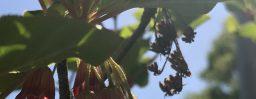 5月25日軽井沢。小満。蚕起食桑。