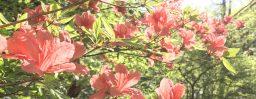 5月5日軽井沢。立夏。蛙始鳴。