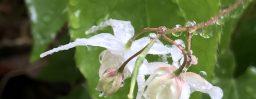5月9日軽井沢。立夏。蛙始鳴。