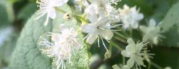 5月22日軽井沢。小満。蚕起食桑。