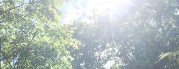 6月1日軽井沢。小満。麦秋至。