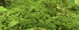 6月7日軽井沢。芒種。螳螂生。