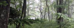 6月21日軽井沢。夏至。乃東枯。
