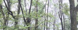 9月8日軽井沢。白露。草露白。
