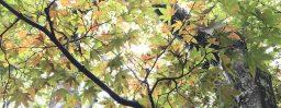 9月26日軽井沢。秋分。雷乃収声。