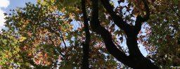 10月10日軽井沢。寒露。鴻雁来。
